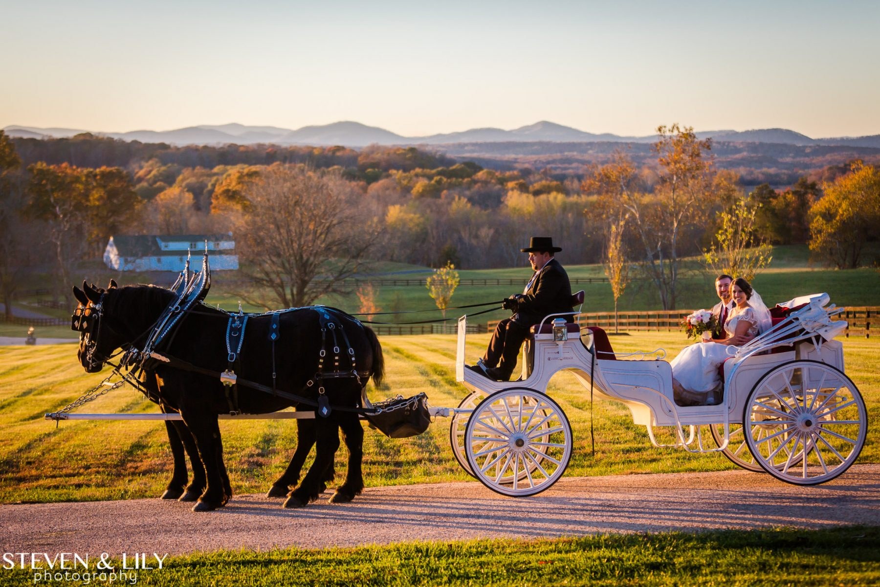 Bride and Groom in Horse and Carriage Wedding at Mount Ida Farm & Vineyard at Mount Ida Reserve. Black horses pull white carriage with mountain backdrop/